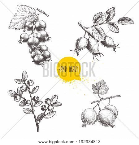 Hand drawn sketch style berry branches set. Blueberry branch rose hip branch black or red currant and gooseberries with sliced berry. Eco berries vector illustration isolated on white background.