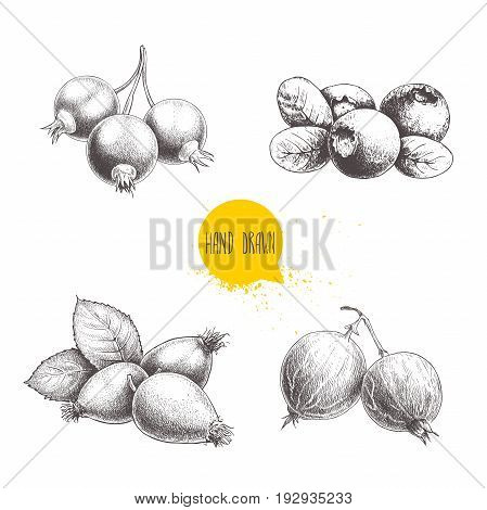 Hand drawn sketch style berry set. Blueberry with leaf rose hip branch with leafs black or red currant and gooseberries. Eco berries vector illustration isolated on white background.