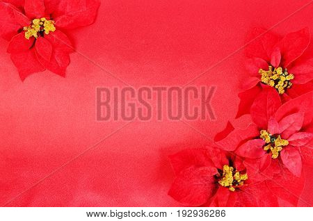 Christmas flower poinsettia on a red silk  background