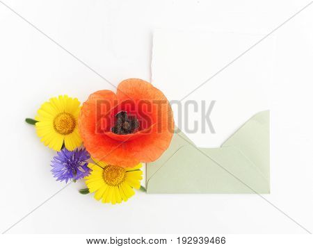 envelope with meadow flowers and red poppies, green leaves on white background. Top view