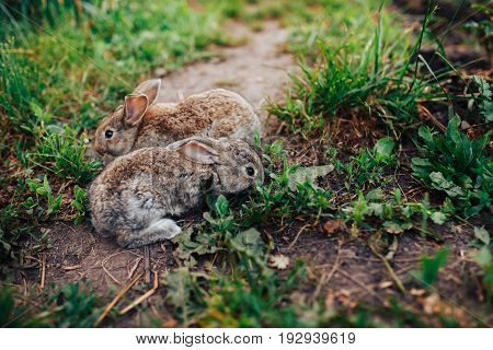 Family of rabbits little children live in a pet farm. Concept eco-meat, breeding rabbits.