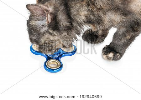Cat sniffing blue spinner lying on the floor, close-up, isolated on white background