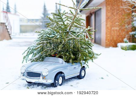 Small toy car with Christmas tHewed xmas tree from snowy forest. Family, tradition, holiday