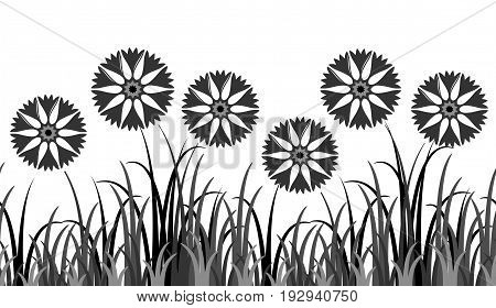 vector seamless border with cornflowers in grass isolated on white background