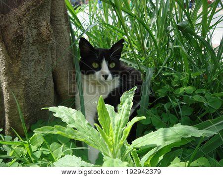 Черная кошка на природе cat animal nature fluffy  beautiful