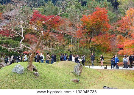 Japan Autumn Garden