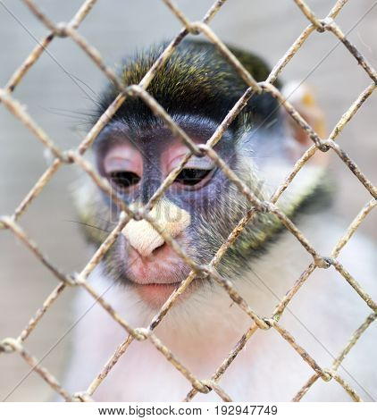 Monkey in a cage in a zoo .