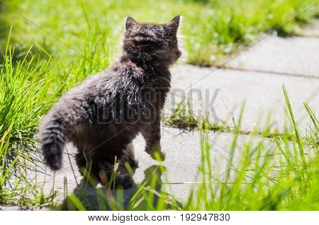 small funny kitten is walking away on the road