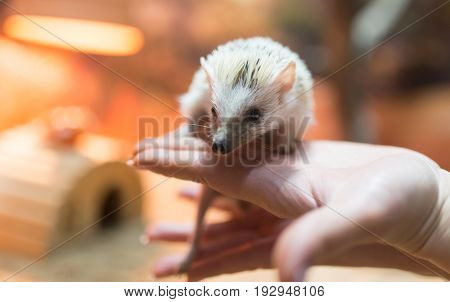 Hedgehog in his hand at the zoo