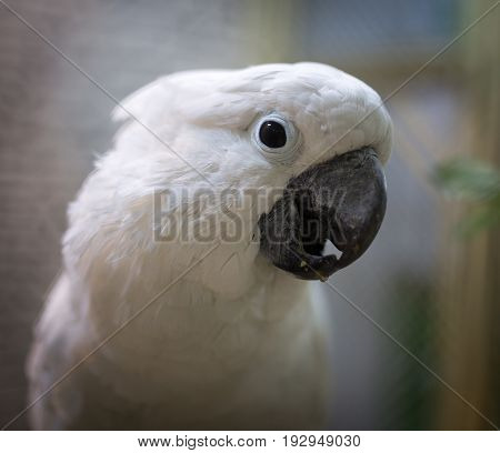 Portrait of a white parrot in a zoo