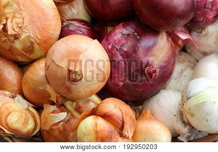Organic Red And White Onions