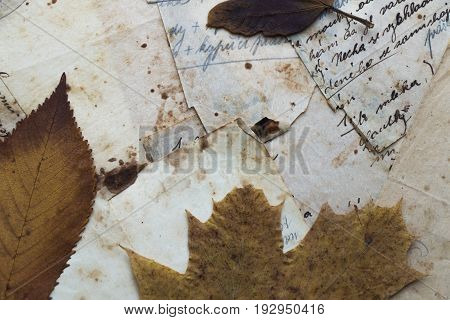 Still life. Top view of old paper with dry leaves. Recipe. Czech language. Translation (top paper) baking powder (right paper) flour until is lets it cool down are mixed of milk yolks.