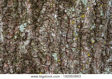 A close up of a tree trunk with moss on it