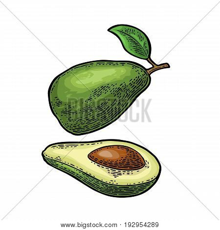 Whole and half avocado with seed and leaf. Vector color vintage engraving illustration for menu, poster. Isolated on white background