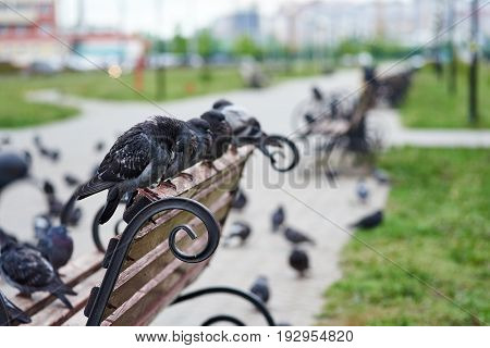 A group of pigeons sitting on a bench in a city street