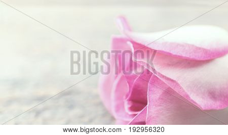 Flower Of Rose On Rustic Wooden Background. Greeting Card With Flowers For Valentine's Day, Woman's