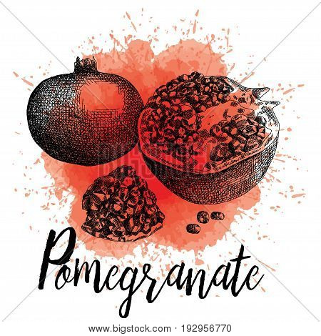Vector illustration of a pomegranate in hand-drawn graphics. The fruit is depicted on a red watercolor background. Juice Packaging Design