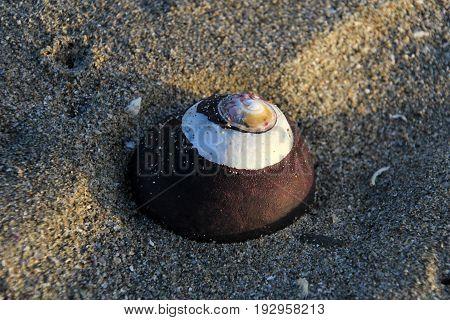 Seashell in the desert, National Park Llanos De Challe, Atacama, Chile, South America