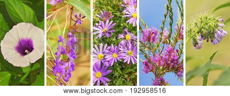Floral panoramic banner with lilac purple flowers