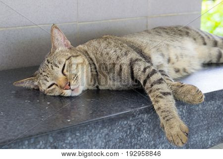 Adorable tiger tabby cat relaxing and sleeping on Textile floor
