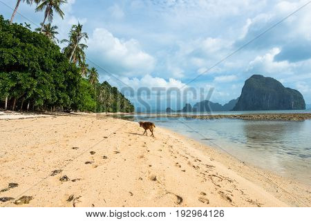 EL NIDO, PALAWAN, PHILIPPINES - MARCH 29, 2017: Wide angle view of Las Cabanas Beach with a walking dog.