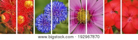 A panorama of a set of flowers in a horizontal banner