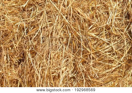 Pile of dry rice chaff surface texture background