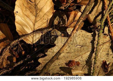 Fallen old leaves/Fallen leaves background on autumn.
