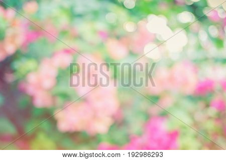 Abstract blurred and bokeh background of flowers