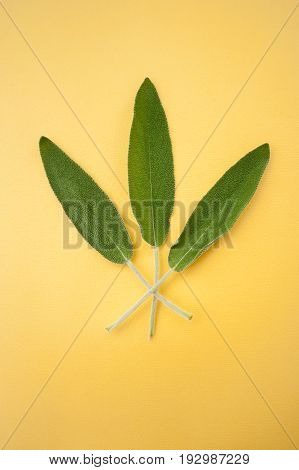 Three Leaves Of Fresh Sage On A Bright Yellow Background..