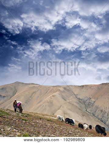 DOLPO, NEPAL - SEPTEMBER 5, 2011: Tibetan nomad poses for a photo at Shey La pass in Shey Phoksundo National Park in the Nepal Himalaya