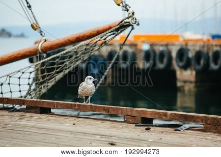 A seagull sits on a wooden pier