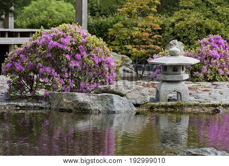 garden in the Japanese style a small pagoda lantern rocks bushes with pink flowers trees green bushes reflected in the water pond in the pond water