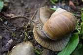 Snail gastropod mollusk with spiral sheath in forest close-up. Top view poster