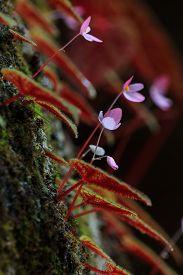 closeup of Begonia plant in the nature Phu Hin Rong Kla National Park Phitsanulok Thailand