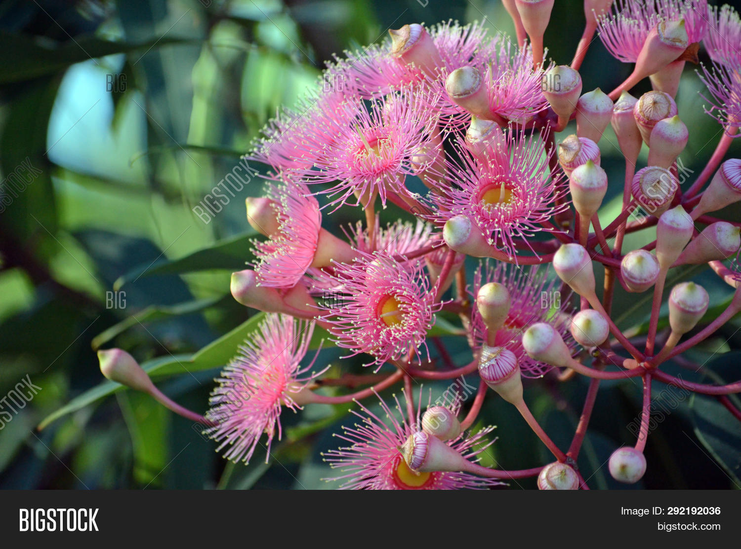 Pink Blossoms Image Photo Free Trial Stock