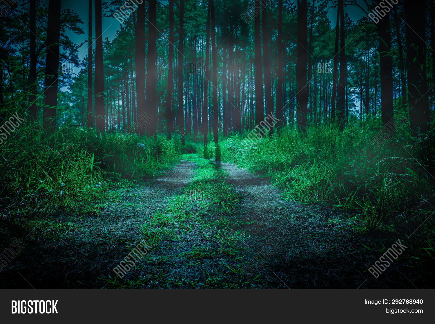 Dark Forest Fog Image Photo Free Trial Bigstock Hd wallpapers and background images. dark forest fog image photo free