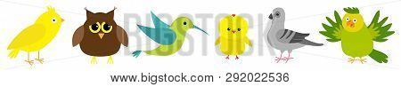 Bird Set Line. Colibri, Canary, Parrot, Dove, Pigeon, Owl, Chicken. Cute Cartoon Characters Icon. Ba