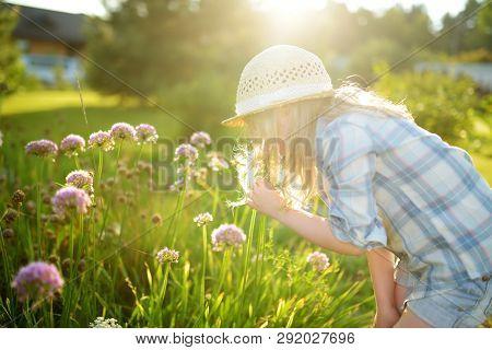 Cute Little Girl Wearing Straw Hat Admiring Tall Purple Garlic Flowers On Sunny Summer Day. Child An