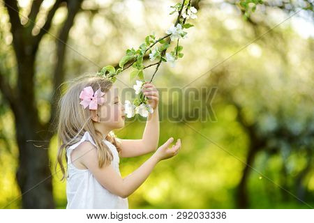 Adorable Little Girl In Blooming Apple Tree Garden On Beautiful Spring Day. Cute Child Picking Fresh