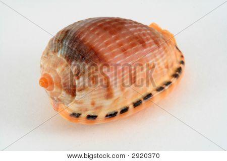 Seashell Isolation