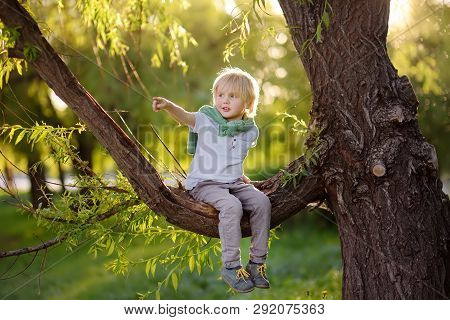 Little Boy Sits On A Branch Of A Big Tree And Points With His Finger. Child's Games. Active Family T