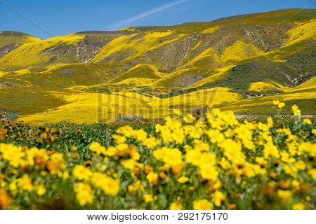 Carrizo Plain National Monument During The California 2019 Superbloom. Intentionally Defocused Hills