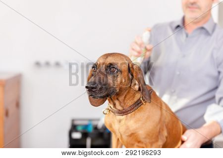 An image of a Bavarian Welding Dog Grooming