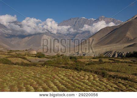 Jhong Khola Valley Fields