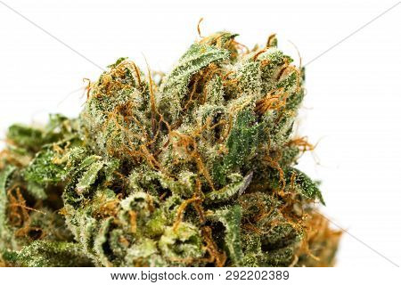 Fibers And Crystals On A Cannabis Bud