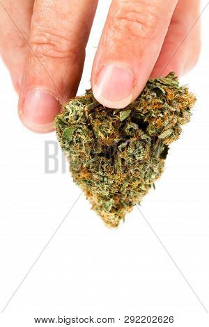 Holding A Clipped Bud