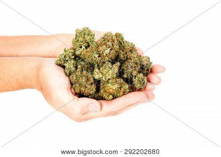 Hands On Cannabis