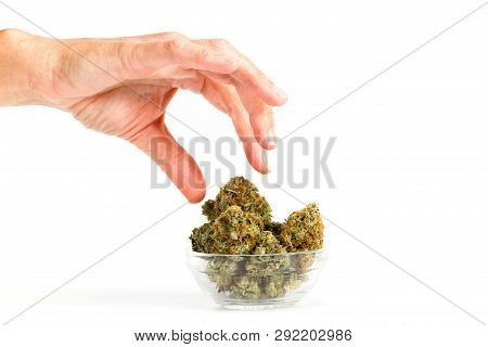 Picking Out A Bud