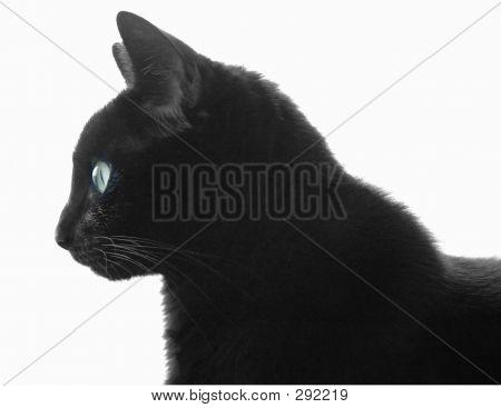 Black Cat Profile Over White
